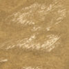 004- Florentine Leaf Gold (OD-4402)
