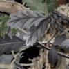 052-Grey Oak