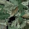 136- Green Oak